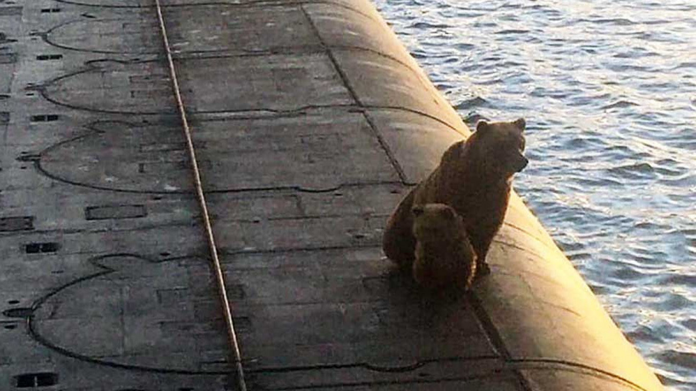 VIDEO. O ursoaică și puiul ei, împușcați de soldați ruși după ce s-au urcat pe un submarin nuclear