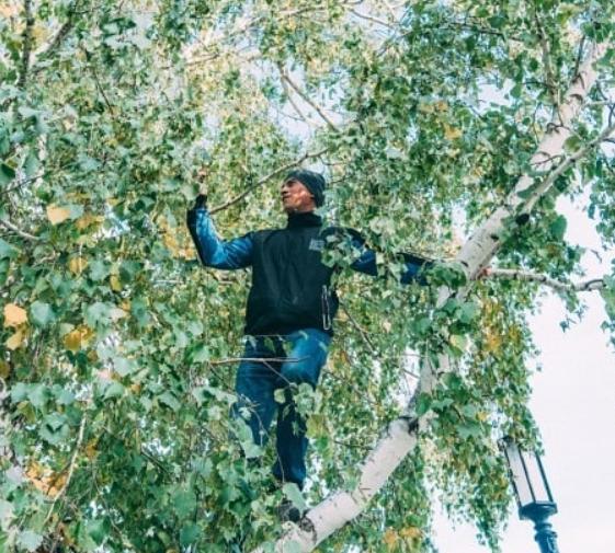 Un student din Siberia urcă în fiecare zi în vârful unui copac pentru a avea semnal, ca să poată participa la cursuri