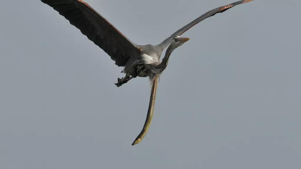 Imagine ireală surprinsă de un fotograf amator. Ce a pățit o pasăre după ce a mâncat un țipar