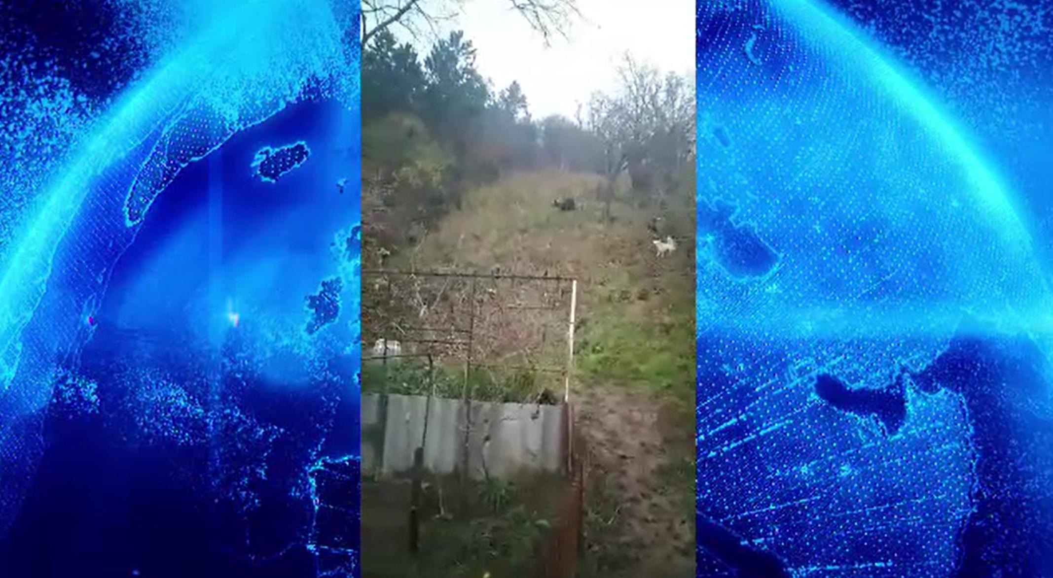 Cetățenii din Târgu Mureș, avertizați prin RO-Alert după ce un urs a fost văzut în oraș