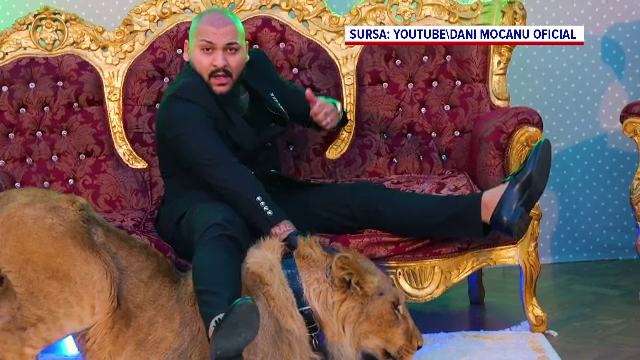 Leul din clipul lui Dani Mocanu a fost confiscat. Politia a mai gasit inca 8 lei, intr-un sat din Dambovita. Ai cui erau