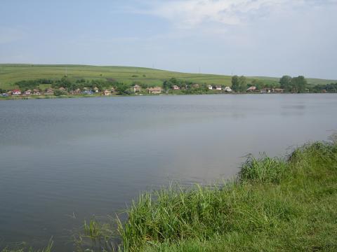 Lacurile din nordul Capitalei, pline de fecale si urina! Mor pestii!!!
