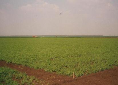 Campania Greenpeace impotriva culturilor modificate genetic a ajuns si in Romania
