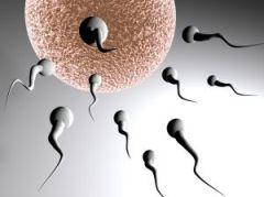 Sansa pentru femeile care nu pot avea copii. Medici romani si maghiari vor invata cot la cot