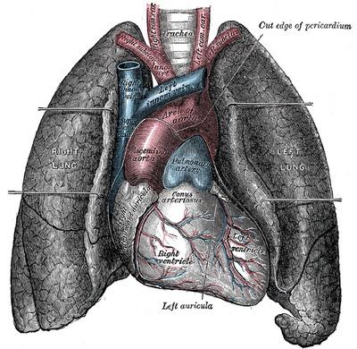 Gustul amar, detectat de plamani. Afla cum ii ajuta pe bolnavii de astm
