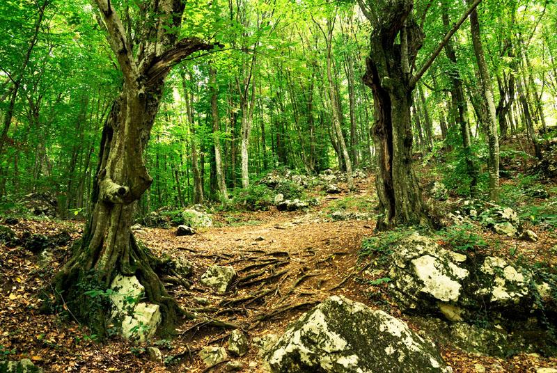 Vanatorii din Hunedoara au mers in cautarea urmelor de mistreti si caprioare.