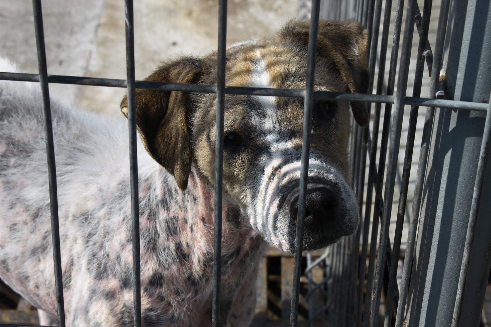 Adoptiile de caini, descurajate la Arad de o taxa de 90 lei. Cat plateste Primaria pentru ingrijire