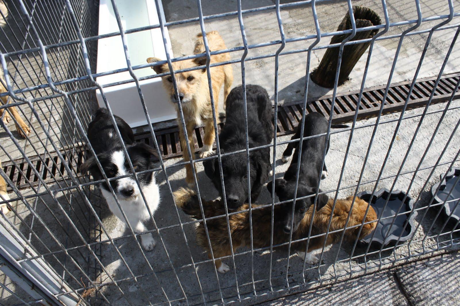 Instanta a decis! Cainii fara stapan dintr-un adapost din Oradea, au scapat de eutanasiere