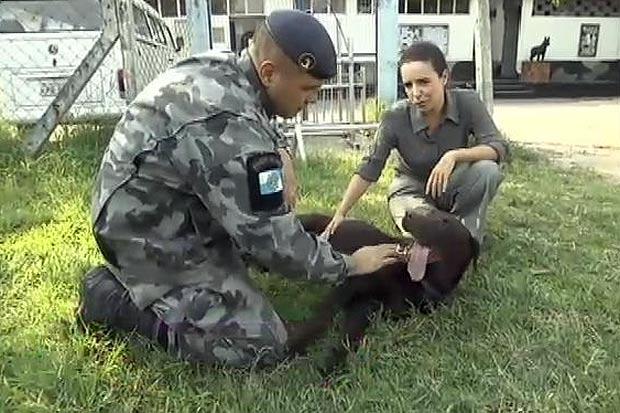 Un caine politist din Brazilia,
