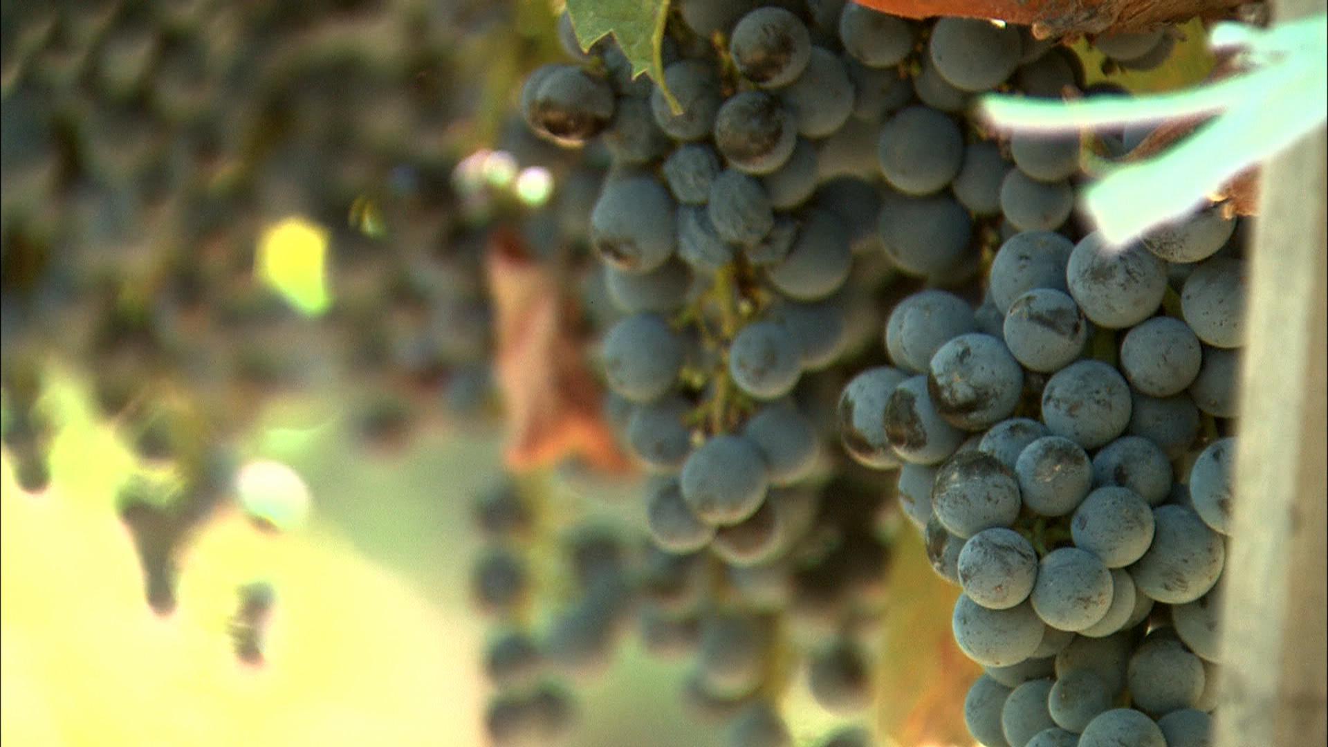 Ascensiunea vinului romanesc si cine investeste in podgorii. Un reportaj realizat de Alex Dima
