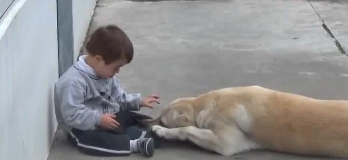 Cel mai dragastos labrador din lume. Cum imbratiseaza cainele un copil cu Sindromul Down. VIDEO