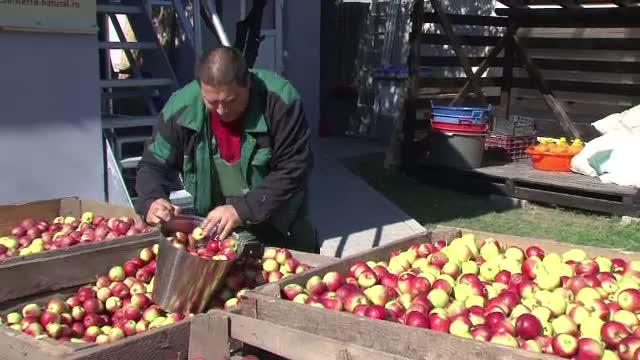 Centrul orasului Targu Mures are zilele acestea un parfum dulce-acrisor de mere domnesti