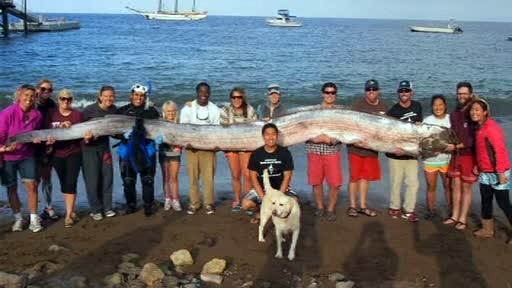 Creatura marina gigantica, de 5 metri si jumatate, descoperita in largul coastei californiene. VIDEO