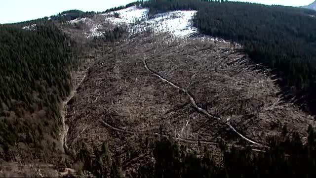 Hotii de lemne care au masacrat padurile de langa Lipova, judetul Arad, au fost prinsi in flagrant