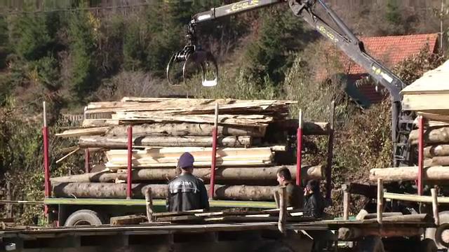 Doi hoti de lemne, retinuti, dupa ce l-au atacat cu toporul pe padurarul care i-a prins furand