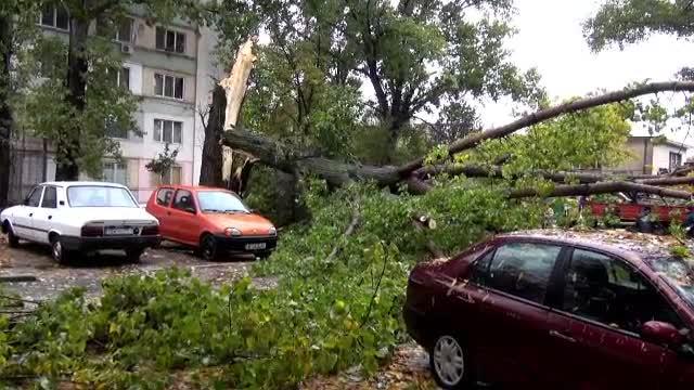Imaginile dezastrului din cea mai urata zi de toamna a lui 2014: cod rosu de inundatii in Vest, copaci smulsi in toata tara