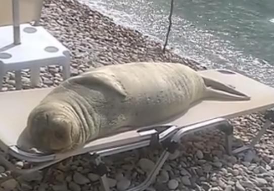 Imaginile care fac deliciul internautilor. Cum a fost filmat un leu de mare, la plaja. VIDEO