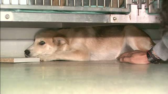Zeci de oameni vor sa o adopte pe Tașa, catelusa torturata de trei indivizi. Medicii veterinari o vor opera in scurt timp