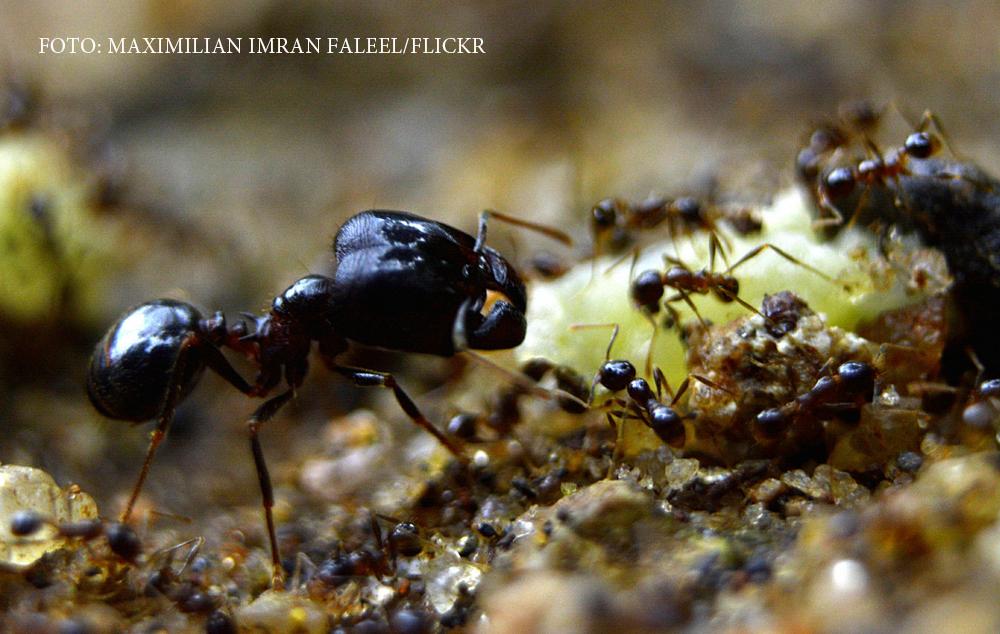 Tot ce se stia despre furnici este gresit. Cat de putine dintre ele muncesc cu adevarat