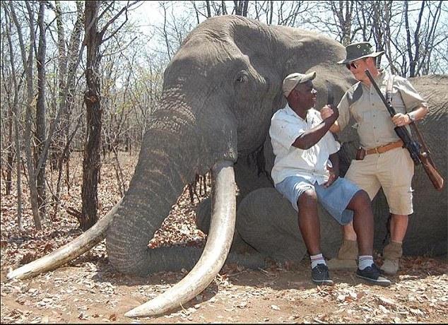 Imagini revoltatoare, la 3 luni de la moartea leului Cecil: un vanator a ucis cel mai mare elefant din ultimii 30 de ani