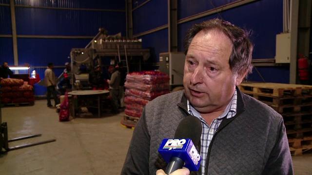 Soiul de cartofi cu care fermierii din Romania au dat lovitura. Se vand la pret dublu si sunt la mare cautare in restaurante