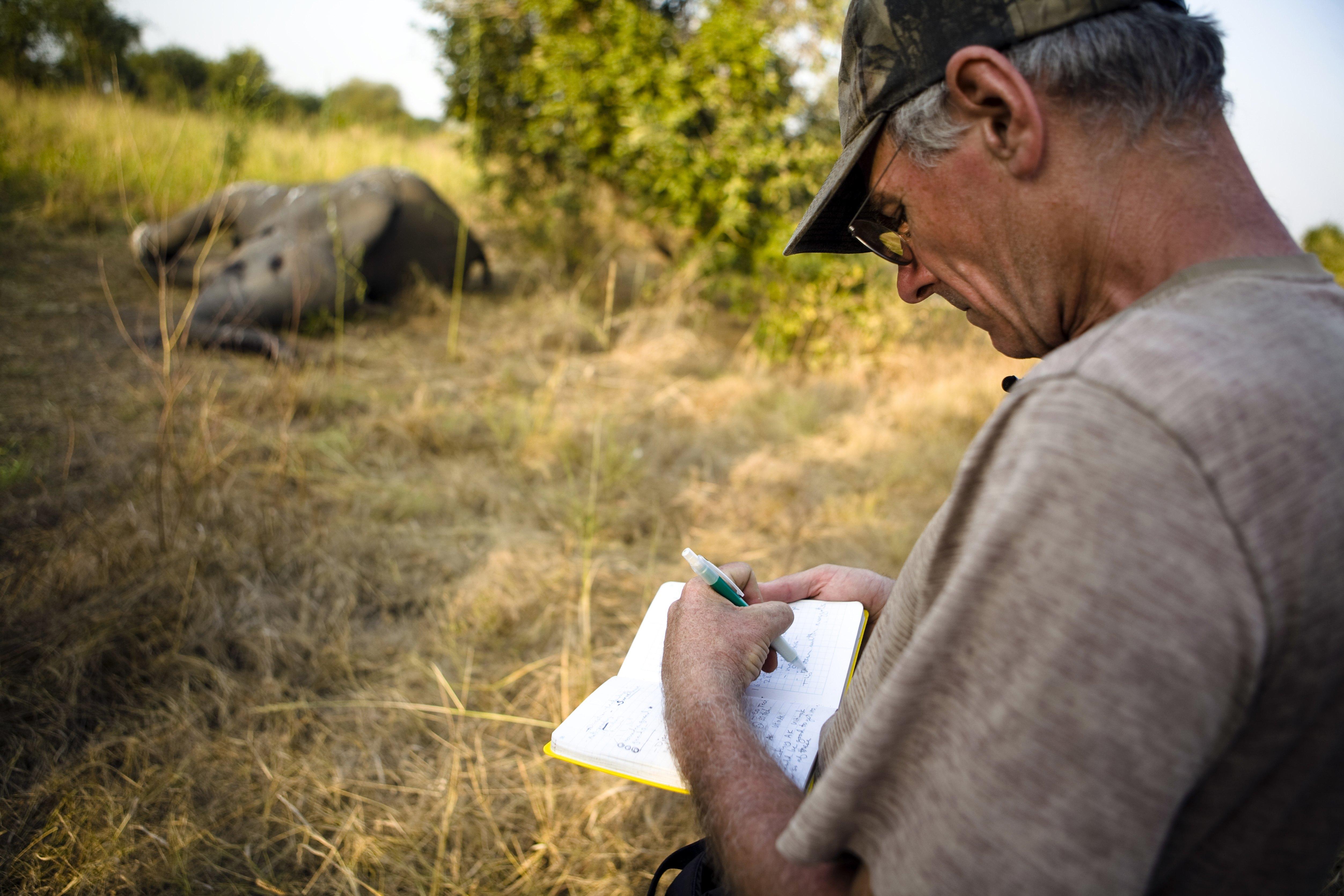 Macel in masa in parcul national din Zimbabwe, in care traia si leul Cecil. 62 de elefanti au fost otraviti si decapitati
