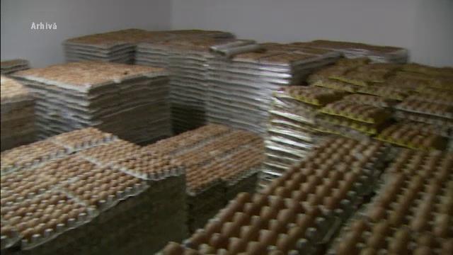 Pericol de imbolnavire in judetul Covasna. 10.000 de oua, infestate cu salmonela, au fost retrase de pe piata