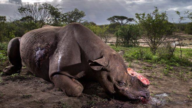 Fotografie şocantă, cu un rinocer măcelărit în Africa, premiată la concursul Wildlife Photographer of the Year