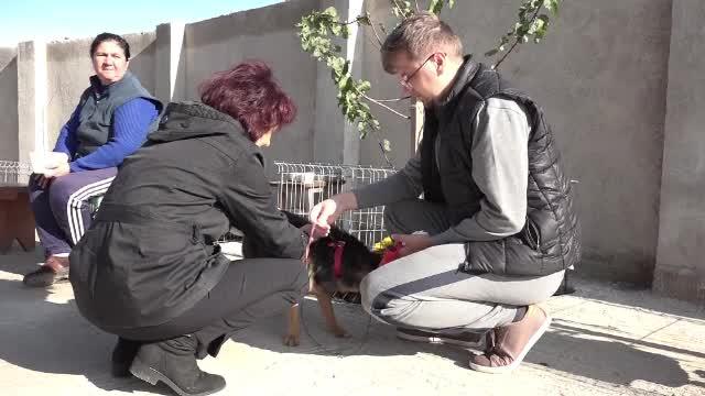 Campanie de sterilizare gratuită a câinilor din Alba