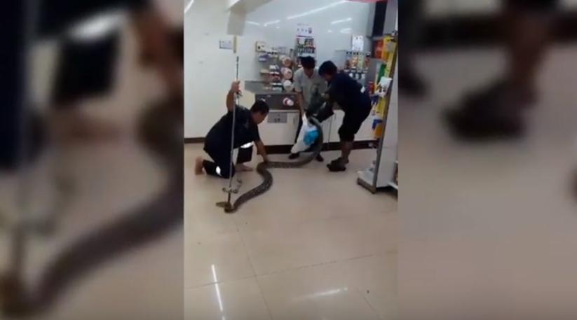Cum a fost surprins un piton de 4 metri într-un magazin din Thailanda. VIDEO