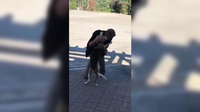 Revedere emoţionantă: un bărbat şi-a revăzut câinele pierdut acum 5 săptămâni, după un accident pe Valea Oltului