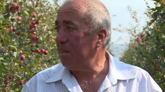 """Un fermier a izbucnit în plâns în livadă. """"Tinerii noștri se duc la cules de fructe în Europa"""""""