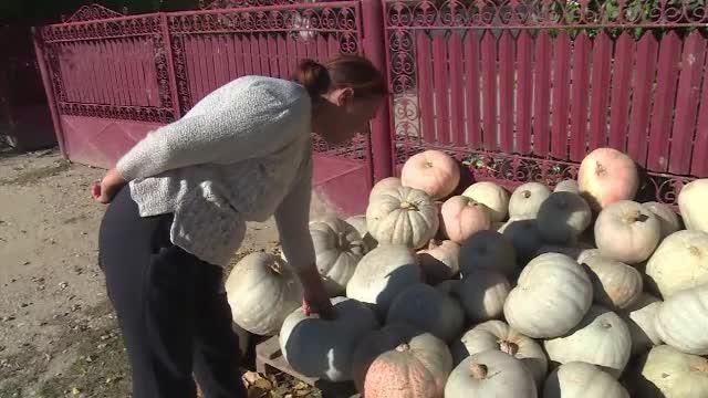 După o vară secetoasă, urmează o toamnă păguboasă pentru agricultori. Efectele negative