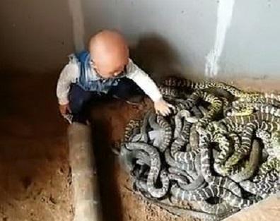 Cum reacționează un bebeluș după ce descoperă un cuib de șerpi. VIDEO