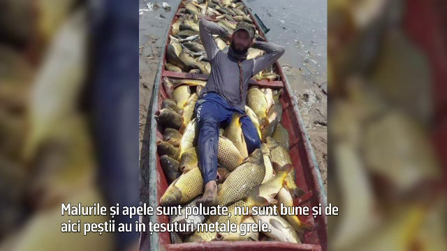BRACONIERI FĂRĂ FRONTIERE, partea a III-a. Românii, îmbolnăviţi de peştele