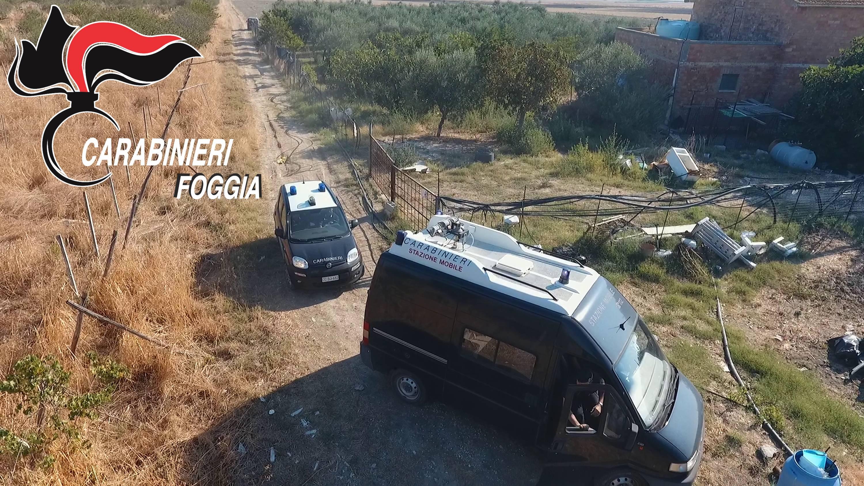 Un român şi-a făcut o plantaţie uriaşă de marijuana pe un teren viran din Italia