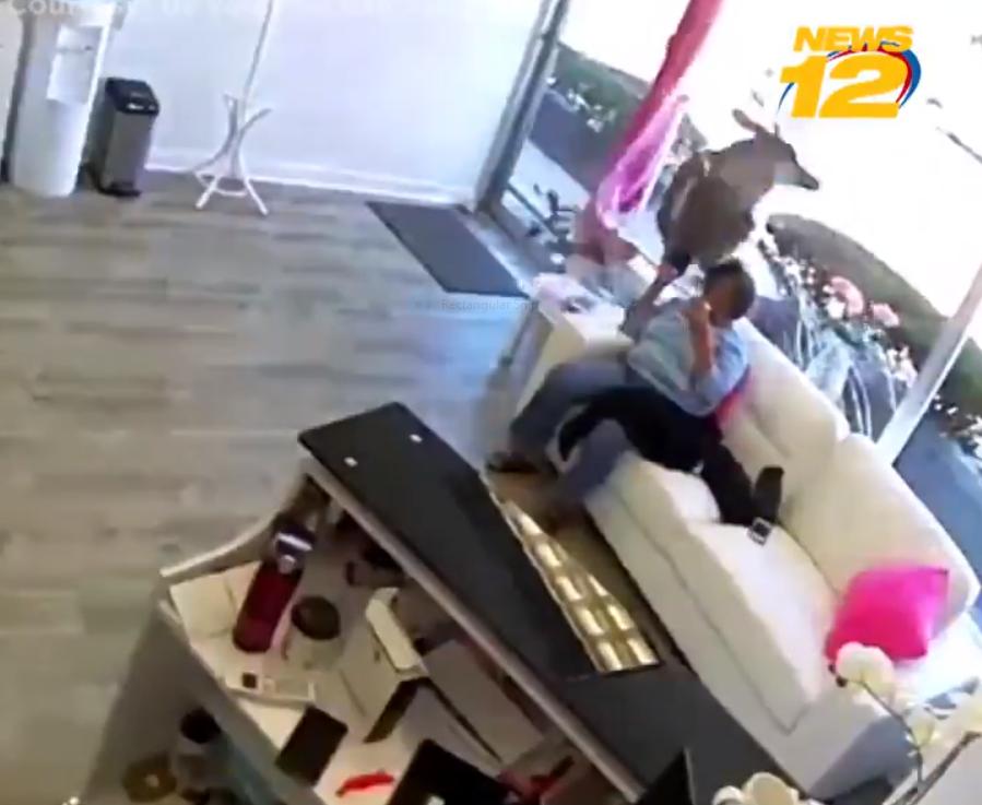 Video. Un cerb a pătruns prin geamul unui coafor și a lovit o clientă