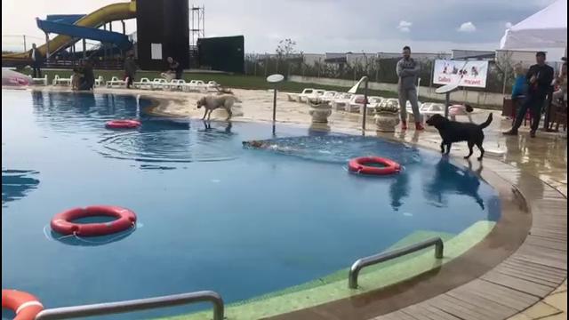 Distracție pentru zeci de căței la un eveniment caritabil, în Baia Mare
