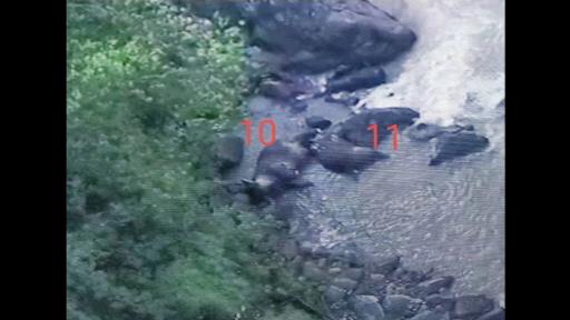 11 elefanți, găsiți morți la baza unei cascade din Thailanda. Scenele filmate cu o dronă