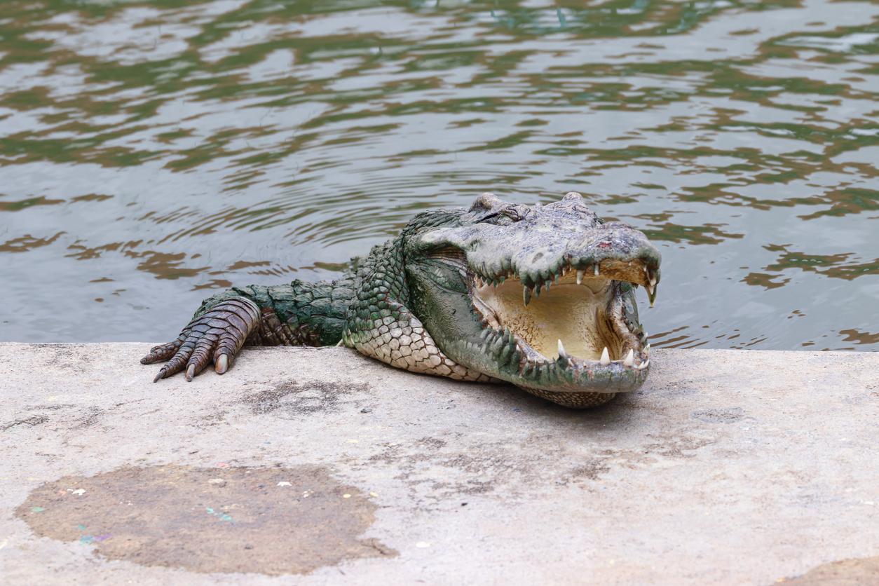 Momentul în care un grup de săteni capturează un crocodil uriaș, folosind doar un prosop