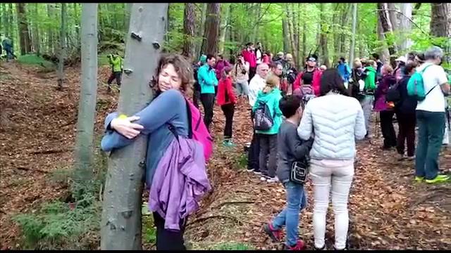 Autorităţile vor să taie 8.000 de copaci lângă Braşov, ca să facă un drum forestier