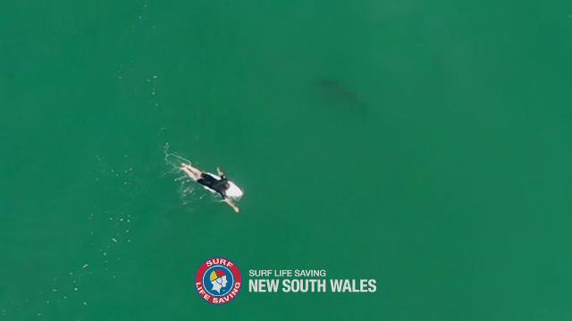 Rechin filmat la câțiva centimetri de un surfer. Ce s-a întâmplat mai departe