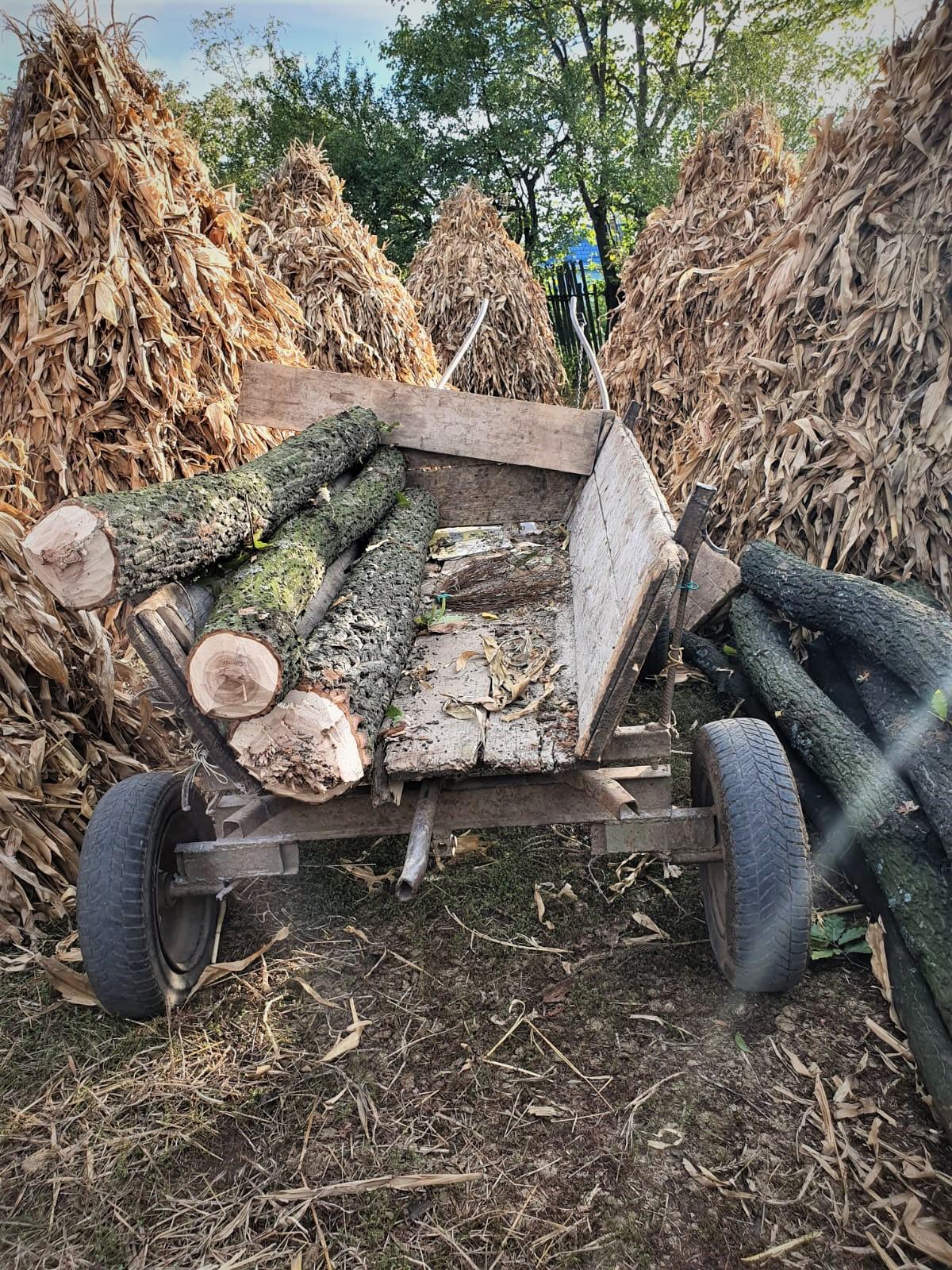 Pădurar bătut de hoții de lemne, în Dolj. Polițiștii i-au prins pe agresori