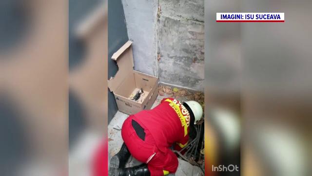 Misiune de salvare neobișnuită în Suceava. Cum au fost salvați 3 pui de pisică de pompieri