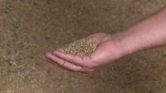 Păgubiți de secetă, tot mai mulți fermieri vând terenurile și utilajele