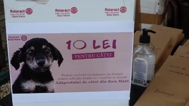 """Metodă inedită pentru a ajuta câinii din adăpostul din Baia Mare: """"Alegeți o carte"""""""