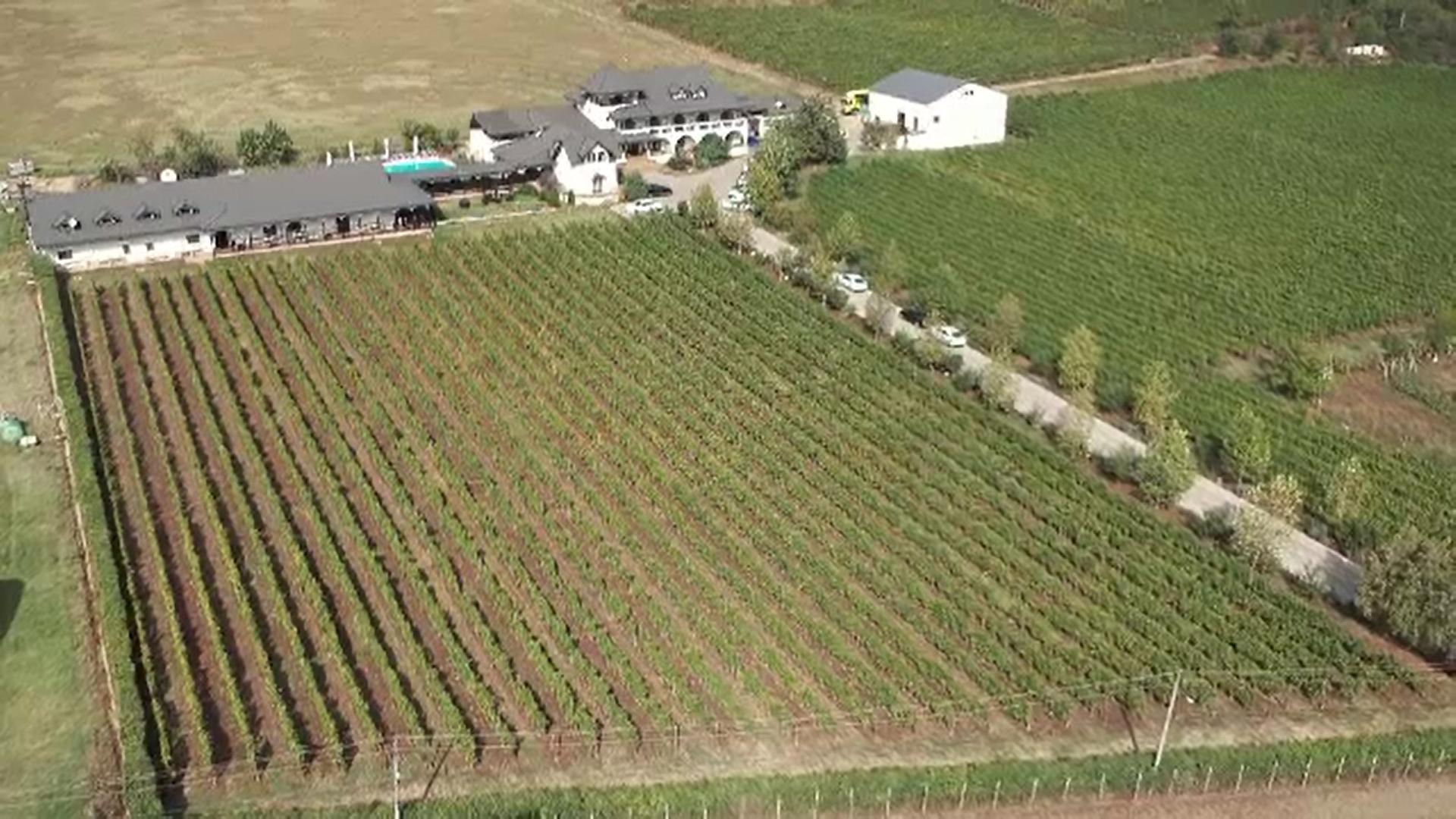 Turismul viticol este la mare căutare printre turiștii români. Cât costă un sejur