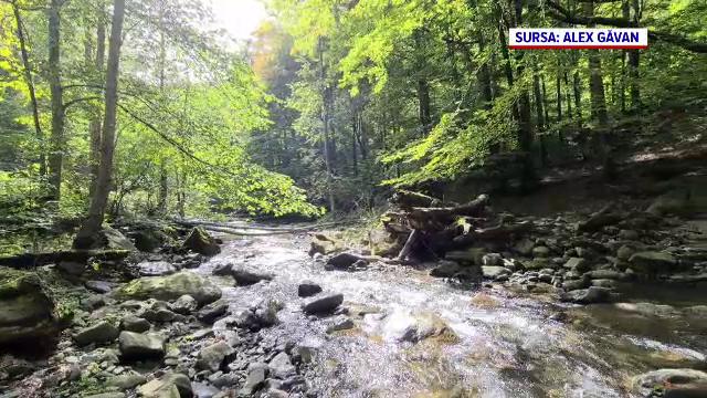 Habitatele naturale, în pericol de dispariție în România. Raport alarmant al Agenţiei Europene de Mediu