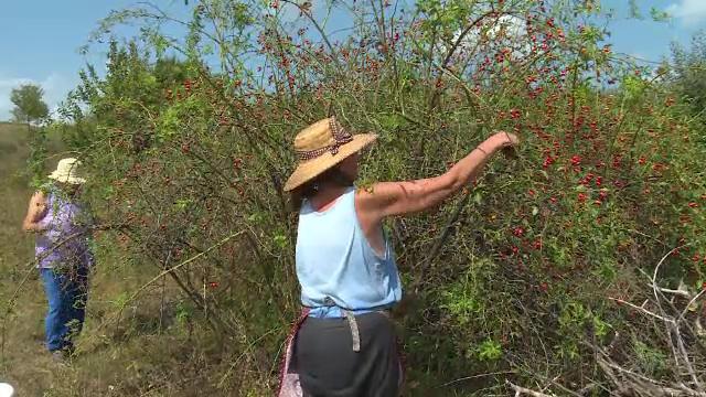 Fructele aflate la mare căutare în pandemie. România trimite producția la export