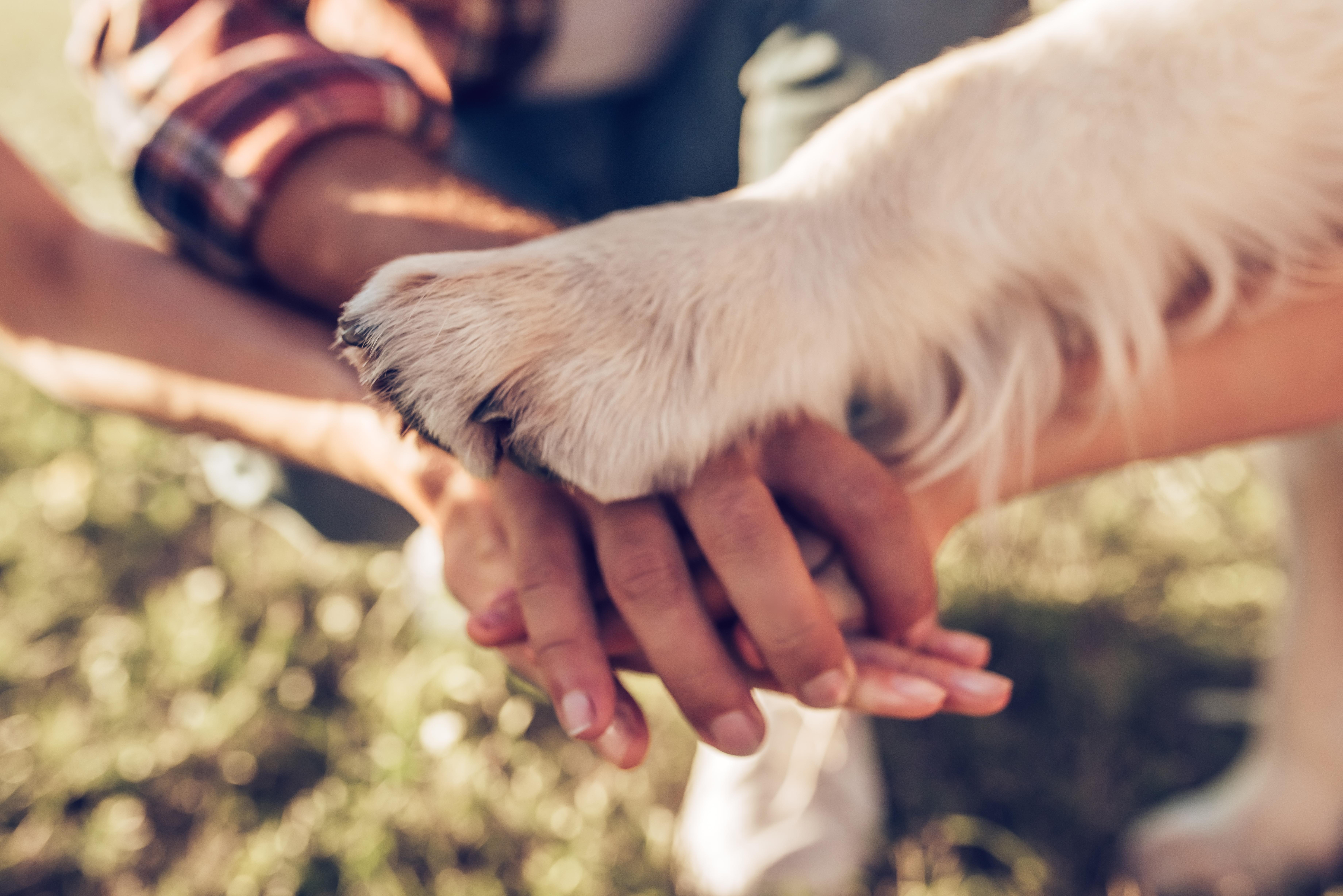 Românii și-au luat mai multe animale de companie în pandemie, arată rezultatele unui studiu